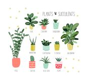 Potted plants collection. succulents and house plants. hand drawn vector art. stock illustration