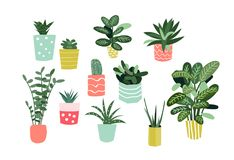 Potted plants collection. succulents and house plants. hand drawn vector art. royalty free illustration