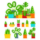 Set of house plants. Colourful plants isolated  flat illustration. House plants for your design. Plant icon isolited on white the background. Composition of Stock Images