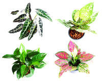 Set of houseplant Stock Images