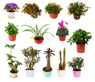 Set of houseplant in  pots Stock Photos