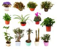 Set of houseplant in  pots Stock Photos