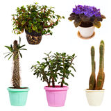 Set of houseplant in  pots. Isolated on white Royalty Free Stock Photo