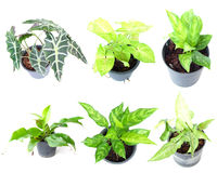 Set of houseplant in pots. Isolated on white background Royalty Free Stock Photography