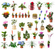 Set of houseplants isolated on the white background Royalty Free Stock Photo