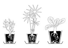 Set of houseplants - vector Stock Photos