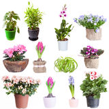 Set of houseplants Stock Photos