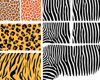 set hud för djur Royaltyfria Bilder