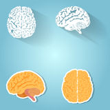 Set of the human brain royalty free illustration
