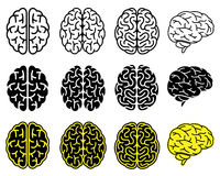 Set of human brains. Royalty Free Stock Photography