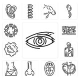 Set of Human Eye, Thyroid, Tonsil, Big Nose, Abdomen, Digestive System, White blood cell, Cellulite, Immune System icons. Set Of 13 simple  icons such as Human Stock Images
