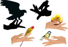 Set of human hands with birds isolated on white Royalty Free Stock Photo