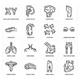 Set of Human Heart, Ankle, Uterus, Bronchioles, Lungs, Platelets, Toe, Brain, Masculine Chromosomes icons. Set Of 16 simple  icons such as Human Heart, Ankle Royalty Free Stock Photography