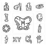 Set of Human Hip, Men Hand, Stomach with Liquids, Masculine Chromosomes, Bones Joint, Finger, Immune System, Trachea, Bone icons. Set Of 13 simple  icons such as Royalty Free Stock Photography