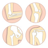Set of human joints, elbow, knee, hip joint Stock Image