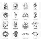 Set of Human Lips, Big Moustache, Immune System, Men Back, Large Intestine, Ribs, Cellule, Long Nail, Digestive System icons. Set Of 16 simple  icons such as Royalty Free Stock Photography