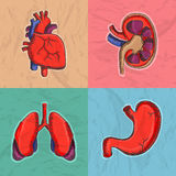 Set of human organs for Health and Medical. Colorful set of internal human organs as heart, kidney, lungs and stomach for Health and Medical Royalty Free Stock Images