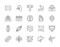 Set of Human Organs Line Icons. Spleen, Stomach, Lungs, Brain, Heart and more. vector illustration