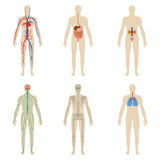 Set human organs and systems of the body vitality Royalty Free Stock Photo