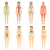 Set of human organs and systems of the body Stock Photo