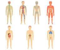 Set of human organs and systems Stock Photo