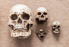 Set of human skulls Royalty Free Stock Photography