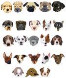 Set Hunde Stockbild