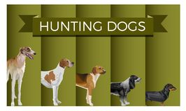 Set of hunting dog stock illustration