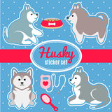 Set of husky breed puppies and dog care accessories stickers Stock Photo