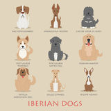 Set of iberian dogs Royalty Free Stock Photos