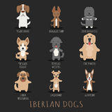 Set of iberian dogs Royalty Free Stock Photo