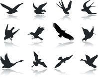 Set icons - 13. Birds Royalty Free Stock Photos