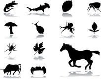 Set icons - 151. Nature vector illustration