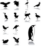 Set icons - 155. Birds Royalty Free Stock Images