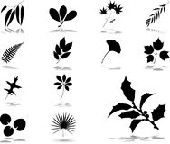 Set icons - 40. Leaves Stock Photos