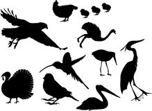 Set icons - 94C. Birds Stock Images
