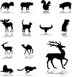 Set icons - 159. Animals. Silhouettes of animals from all parts of the world for your design or business Royalty Free Stock Photos