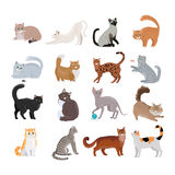 Set of Icons with Cats. Flat Design Vector. Stock Photos