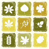 Set of icons with leaves. In shades of green in a grunge style Stock Photo