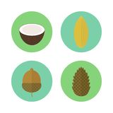 Set of icons nuts. Vector elements for design. Set of circled icons nuts in flat style. Vector elements for design. Pine nuts, coconut, acorn, almond stock illustration