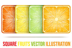 Set of icons Square fruits slices. Vector Illustration. Royalty Free Stock Photo