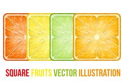 Set of icons Square fruits slices. Vector Stock Image