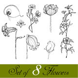 Set of illustrated cute flowers Stock Photo