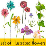 Set of illustrated cute flowers Stock Images