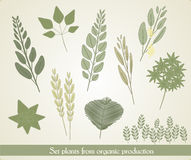 Set illustration of plants, vector Stock Images