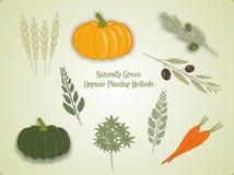 Set illustration of vegetables, vector Stock Images