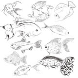 Set of illustrations fish. Wild. Ocean. Royalty Free Stock Image