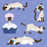 Set of illustrations - Siamese cat Stock Images
