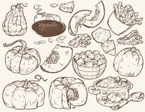 Set of illustrations vegetables - pumpkin stock illustration
