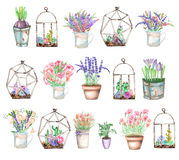 A set of illustrations with watercolor bouquets of wildflowers in a rustic jar and pots and florariums with succulents and cactus vector illustration